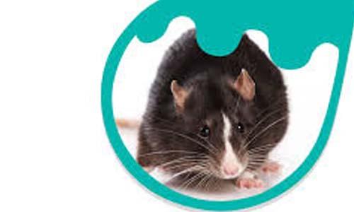 Anti Rodent Masterbatch